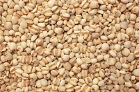 seeds of the medicinal plant Adlay, Adlay millet, Job´s tears, Yi Yi Ren, Coix lachryma_jobi