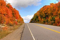 Beautiful red autumn trees along a country road  Algonquin Provincial Park Ontario Canada