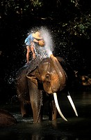 Thailand, Chiang Mai Province, Chiang Mai City, Elephant Bathing