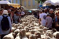 France, Drome, Drome Provencale, Die, Transhumance Festival