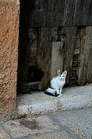 A couple of cats in front of an old door in a convent in Mora de Rubielos (Teruel, Spain)