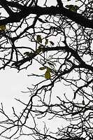 Bare tree branch with few remaining leaves