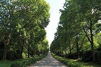 D-Dortmund, Ruhr area, North Rhine-Westphalia, D-Dortmund-Brackel, main cemetery Dortmund, tree-lined walk, footpath, historicism, Route of Industrial...
