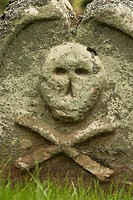 Lichen, various species growing on gravestone in churchyard, skull and crossbones, Borders, Scotland