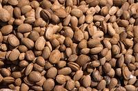 Almond Prunus dulcis nuts for sale