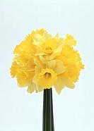 Close_up of beautiful yellow flowers
