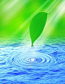 View of a pointed leaf and droplet above water digital composite