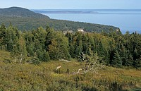 Forested coastline, Fundy N P , Bay of Fundy, New Brunswick, Canada