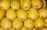 Mango variety Honey Manila Mangifera indica