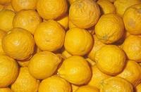 Tangerine variety Pixie Citrus reticulata