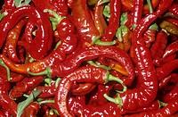Italian Style Sweet Peppers Capsicum annuum