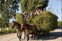 Roma Gypsy family, bringing in hay crop with horse and cart, Transylvania, Romania