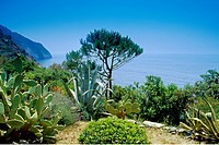 Vegetation at the rocky coast near Riomaggiore, Cinque Terre, Liguria, Italian Riviera, Italy, Europe