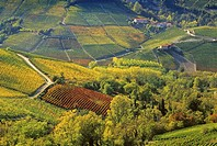 Vineyards in front of Serralunga d´Alba in the sunlight, Piedmont, Italy, Europe