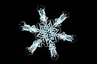 Stellar snow crystal. LM