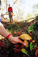 Picking mushrooms.