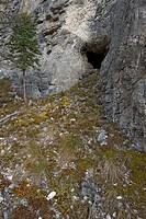 Entrance to grizzly bear den on side of mountain. Yukon Territory, Canada.