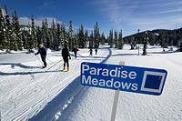 Cross Country skiers ski track set in Paradise Meadows near the Mt. Washington ski resort. Comox Valley, Vancouver Island, British Columbia, Canada