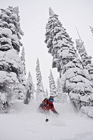 A female skier enjoys fresh snow and wide trees in the backcountry of Fernie B.C