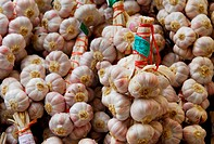 Garlic Allium sativum crop, bunches of harvested French bulbs, strung for sale