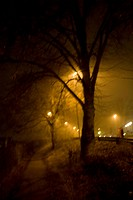 A dark night illuminated by streetlight. A street and a tree, Kalmar, Sweden.