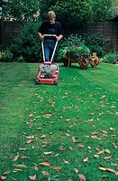 Gardener mowing lawn, using light petrol mower, Hampshire, England, summer