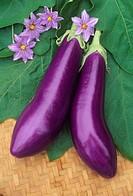 Eggplant, Neon.