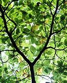 Green leaves on a tree.