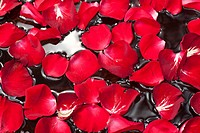 Rose petals in water