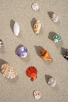 Shells on a beach.