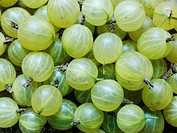 Gooseberries Sweden