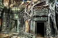 Ta Prohm temple. Angkor. Cambodia.