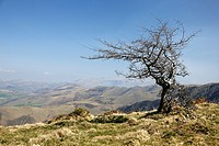 Tree at Col d'Orgambide, Saint-Jean-Pied-de-Port. Pyrenees-Atlantiques, Aquitaine, France