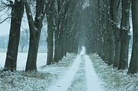 Linden_Alley, winter