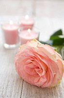 Rose and candles (thumbnail)