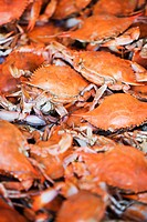 Close_up of crabs