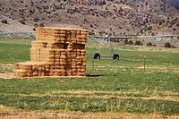 Haystack in the field, Virginia City, Madison County, Montana, USA