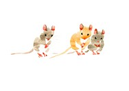 Illustration of three mice, white background