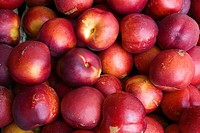 nectarines a cultivar group of peach that has a smooth, fuzzless skin Prunus persica in a shop
