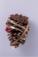 Gold spraypainted pinecone wrapped in Merry Christmas ribbon