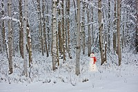 Snowman with red scarf and black top hat standing in a snow covered Birch forest, winter, Anchorage, Alaska