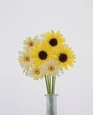 Vase of yellow gerberas and sunflowers