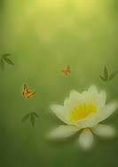 Background of water lily and butterflies
