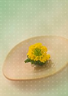 Yellow flower on a plate
