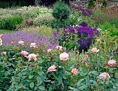 Summer garden, Rosa, Geranium, Salvia, Hosta