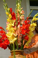 Gladiolus in vase