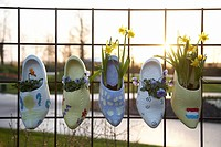 Spring flowers in wooden clogs