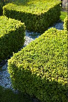 Buxus in formal garden