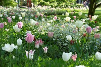 Spring border pastel