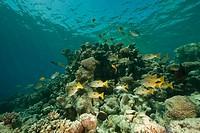 coral, ocean and fish